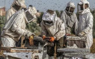 Sprijin pentru apicultori, in vreme de pandemie