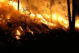 Stare de urgenta in Australia, care se confrunta cu cele mai periculoase incendii din istorie