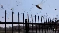 Stare de urgenta in Rusia dupa un episod desprins parca din Biblie: Miliarde de lacuste au devorat tot