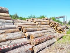 Statul vinde la licitatie lemnul taiat ilegal din paduri. Peste 300 de metri cubi costa aproximativ 60.000 de lei