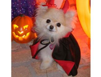 Stefan Banica si Halloween-ul fac echipa in weekend pentru a te distra