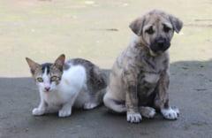 Sterilizare gratuita pentru cainii si pisicile fara pedigree din Bucuresti. Cum poti beneficia de program