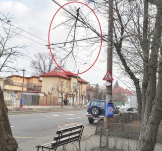 Strada Vatra Luminoasa din Sectorul 2, un real pericol public: Cine plateste daca un copil e ranit? (Galerie Foto)