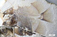 Stramosul temutului piranha, de pe vremea dinozaurilor, gasit in Europa
