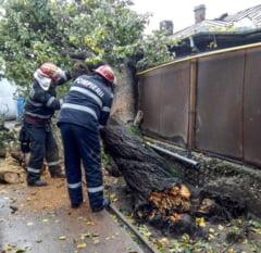 Strazi inundate si copaci cazuti pe masini, la Giurgiu