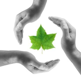 Studentii Universitatii Transilvania din Brasov se pot inscrie gratuit la cursul Green4C