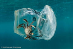Studiu: Poluarea cu plastic a Oceanului Atlantic, de 10 ori mai grava decat se credea. Pandemia va agrava situatia