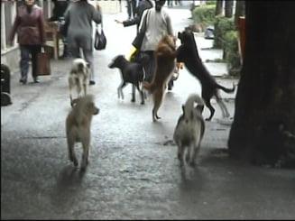 Studiu de 10.000 de lei pentru cainii vagabonzi