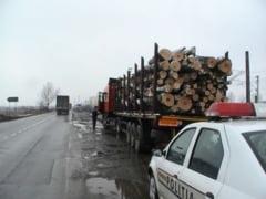 Sub control judiciar pentru furt de lemne