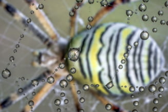 Suntem programati genetic sa ne fie frica de paianjeni si serpi