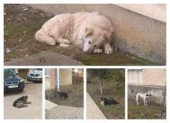 Sustinatorii drepturilor animalelor cer pedeapsa cu inchisoarea pentru tanarul care a spanzurat un caine