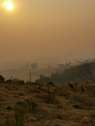 Sute de incendii fac ravagii in Australia: Capitala Canberra este invaluita de un nor de fum