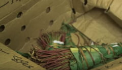Sute de kilograme de droguri au fost capturate in Romania. Destinatia finala era Marea Britanie