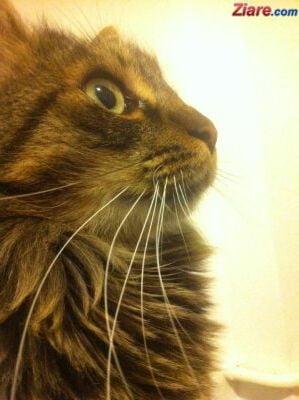 Sute de pisici domestice sunt in carantina la New York. In premiera, au luat gripa aviara