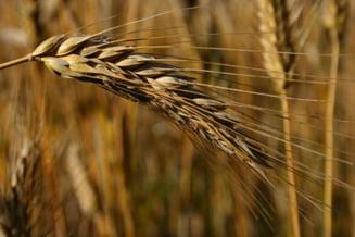 Tabara: Cerealele din Romania vor fi vandute in toata lumea