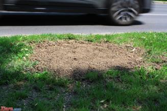 Taierea sau scoaterea din radacini a copacilor, puietilor sau lastarilor, pedepsita cu inchisoare de la 1 la 5 ani (proiect)