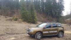 Taieri ilegale de arbori in valoare de 90.000 de lei, descoperite la Suceava