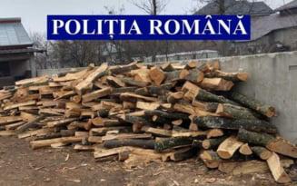 Taieri ilegale si furt de arbori, sanctionate de politistii ialomiteni