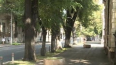 Taieri si fasonari de arbori pe Domneasca