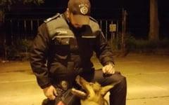 Talhar prins cu sprijinul lui Vog, cainele politist. Agresorul jefuise o batrana in propria locuinta