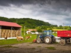 Tanarul fermier: la coada vacii la Cluj sau la capsuni in Spania