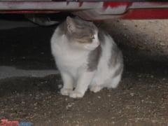 Tara care a declarat razboi pisicilor - doua milioane de feline vor fi eutanasiate