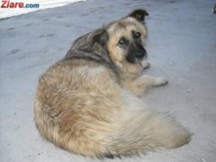 Tara in care e interzis sa tii cainii in lant