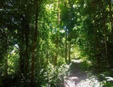 Tara in care elevii si studentii trebuie sa planteze cate 10 copaci pentru a deveni absolventi
