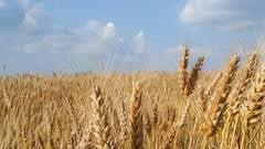 Taranii europeni renunta la agricultura de subzistenta
