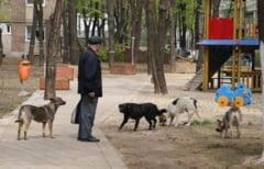 Targujian atacat de o haita de caini in parc