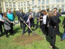 Tariceanu si Cristiana Anghel au plantat stejari aurii la Parlament
