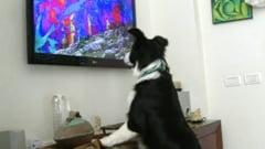 Televiziunea la care se uita cainii, Dog TV, ajunge si in Europa