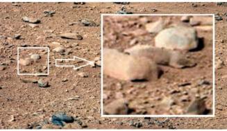 Teoria conspiratiei: Experimente secrete cu animale pe Marte? (Video)