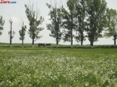 Terenurile agricole tot mai scumpe - preturi mai mari cu 300% fata de ultimii ani