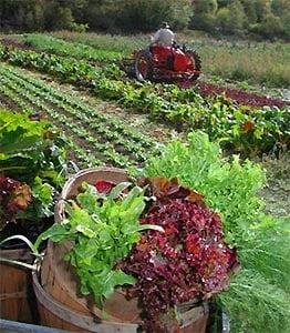 Terenurile cultivate ecologic au crescut ca suprafata cu 9% anul trecut