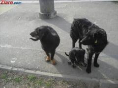 The Independent: A venit timpul ca Romania sa-si extermine armata canina