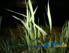 Tineri dati disparuti intr-un lac din Tulcea