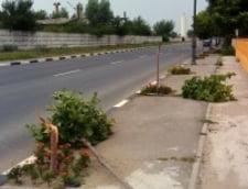 Tinerii din PDL s-au distrat distrugand copaci, la Giurgiu