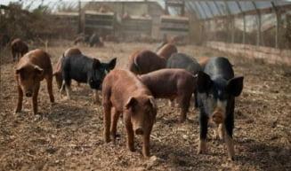 Tinerii fermieri vor investi 10 milioane de euro in fermele de la tara