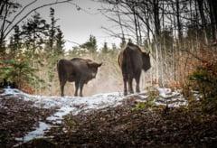 Tinutul Zimbrului Neamt, a doua destinatie din top 100 destinatii verzi din lume