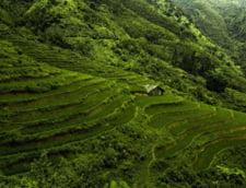 Top 4 experiente in Vietnam