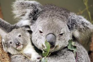Topul speciilor amenintate de incalzirea globala
