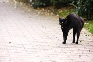Topul superstițiilor în care cred românii. De la pisica neagră care aduce ghinion la datul de bani în prima zi din săptămână