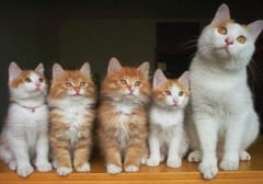 Tot ce trebuie sa stii despre pisicile sterilizate - Ce spune veterinarul