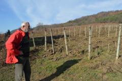 Traditia vinului continuata pe meleagurile Balauseriului