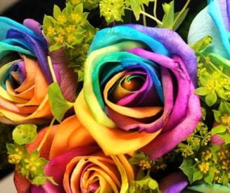 """Trandafirii multicolori, cel mai """"cool"""" cadou"""