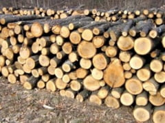 Transporta lemne fara documente