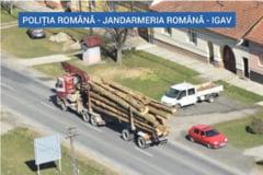 """Transportatori de lemne, """"vanati"""" din elicopter. Dupa trei zile de controale s-au dat doua amenzi si s-au confiscat 127 de metri cubi de lemn"""