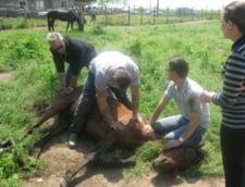 Transportul de cai - interzis, pana la clarificarea situatiei de la Letea (Video)