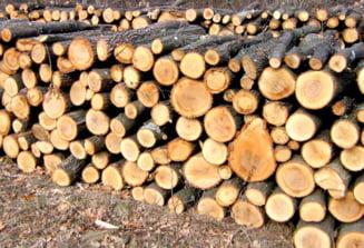 Tranzactii ilegale cu lemne! Firma din Arges amendata pentru nereguli silvice